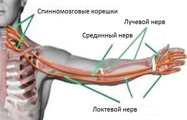 защемление нерва на правой лопатке
