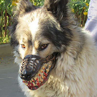 Werewolf Muzzle Creepy Scary Zombie Muzzle For Dogs