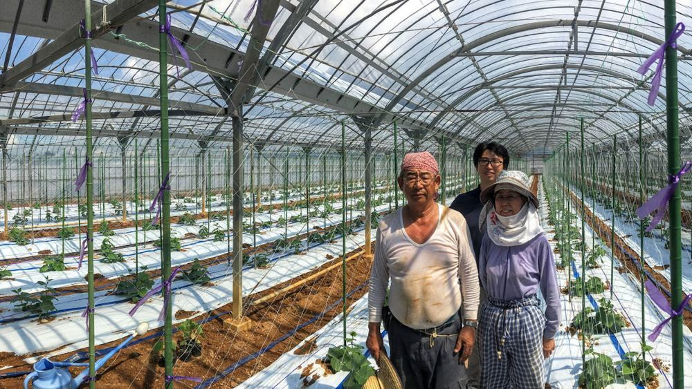 Как японский фермер при помощи глубокого обучения и TensorFlow огурцы сортировал