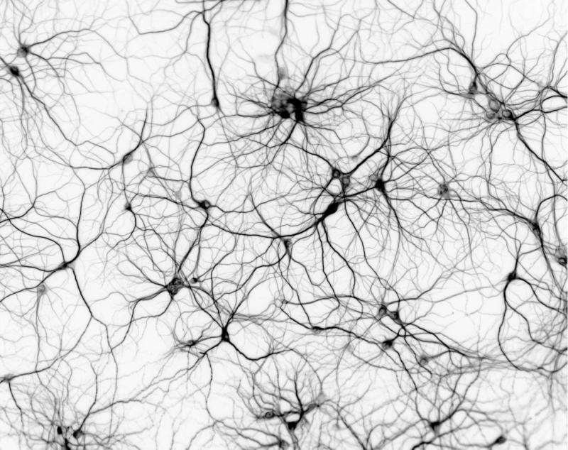 Логика сознания. Часть 9. Искусственные нейронные сети и миниколонки реальной коры