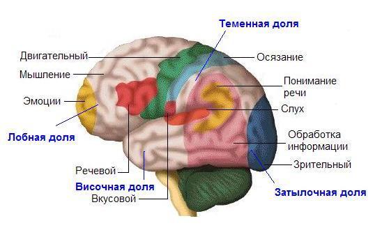 Головной мозг человека центр удовольствия лечение алкоголизма лечение алкоголизма и курения донецк
