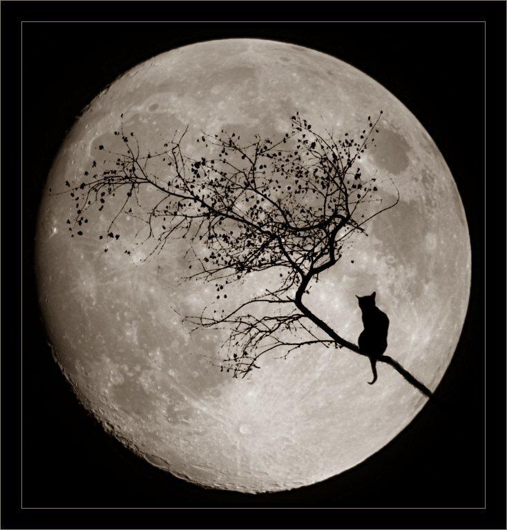 темная луна ава картинки цель подорвать