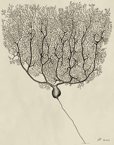 Удивительный мозжечок