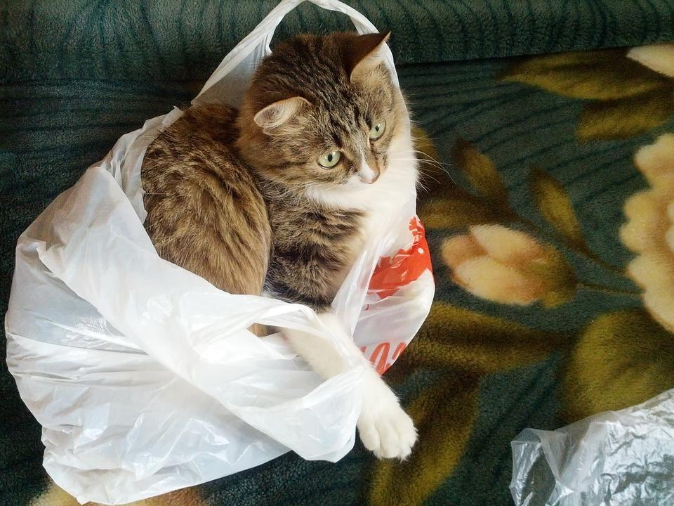 Кот в мешке символизирует отношения интернет-магазинов и агрегаторов или же законодателя и остальных?