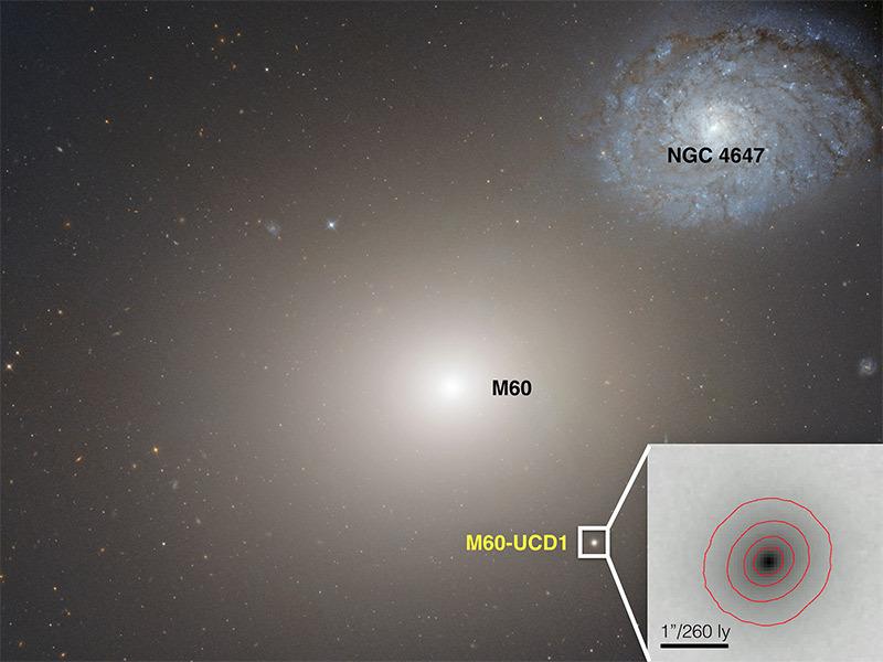 Чёрная дыра в центре сверхкомпактной галактики