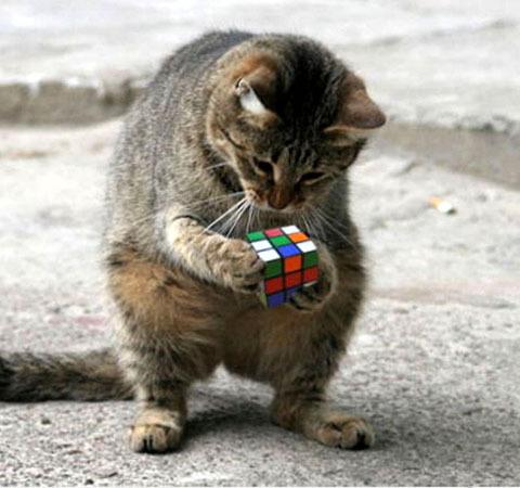 Сборка Кубика Рубика генетическим алгоритмом online без смс