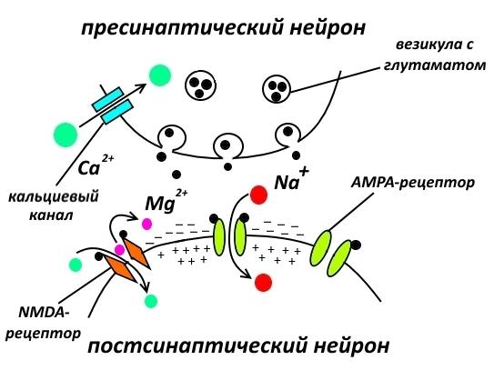 Фармакологическая модуляция памяти. Часть 1