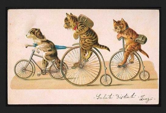 котики и велосипеды