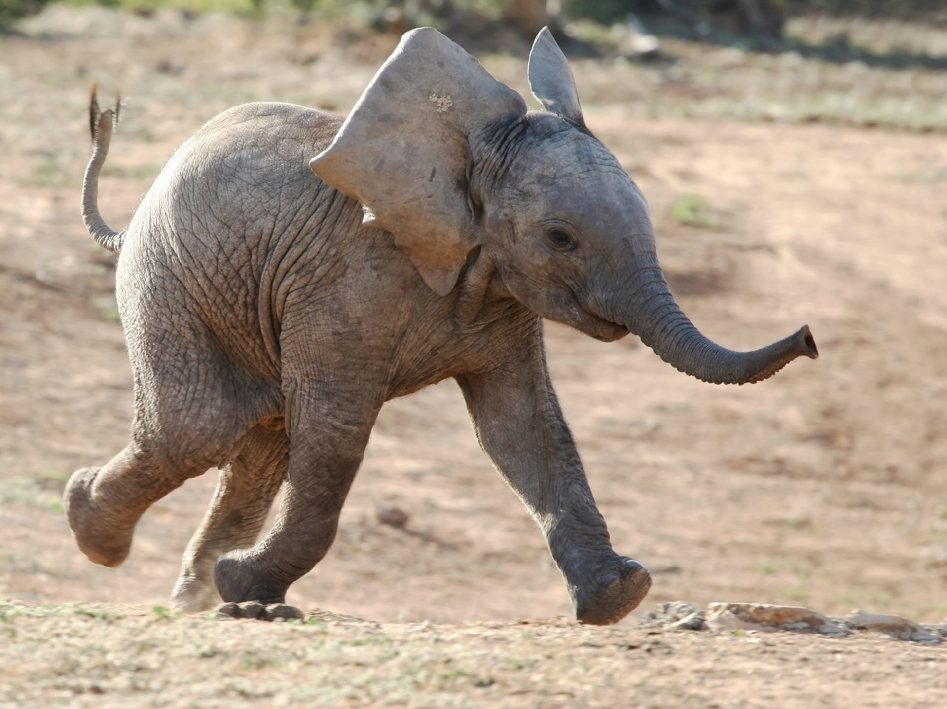 Картинки с прикольными слониками, любовью
