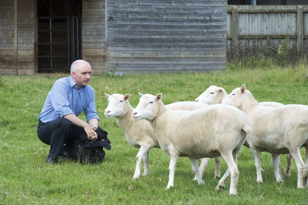 Клоны овечки Долли помогают доказывать безопасность SCNT-клонирования