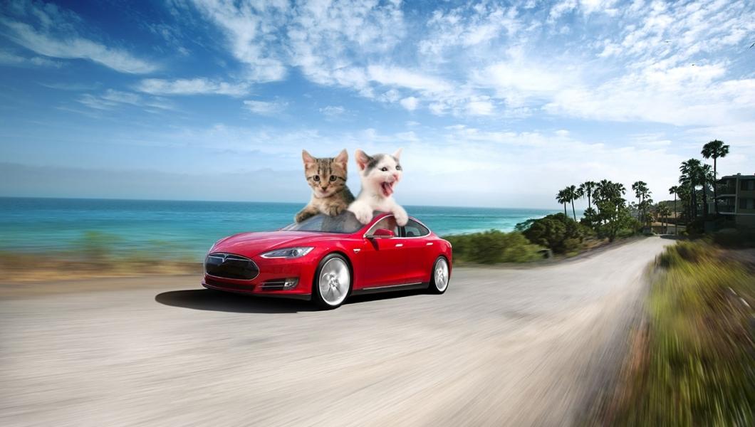 Электромобиль Tesla теперь можно выгуливать как собаку