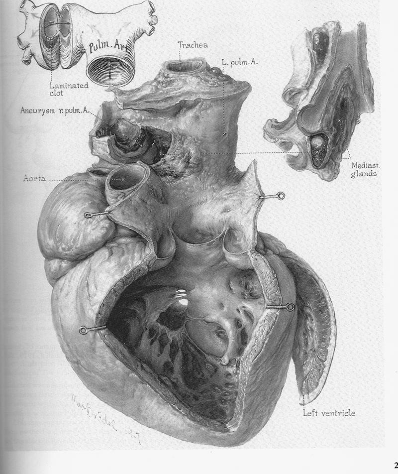 Анатомия Грея Учебник на русском