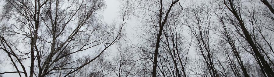 Random Forest: прогулки по зимнему лесу