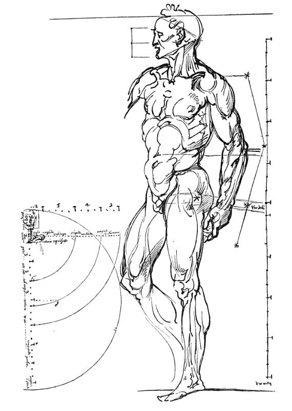 отдельных частей тела и их