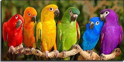 Автоматизированная классификация каталогов по цветам