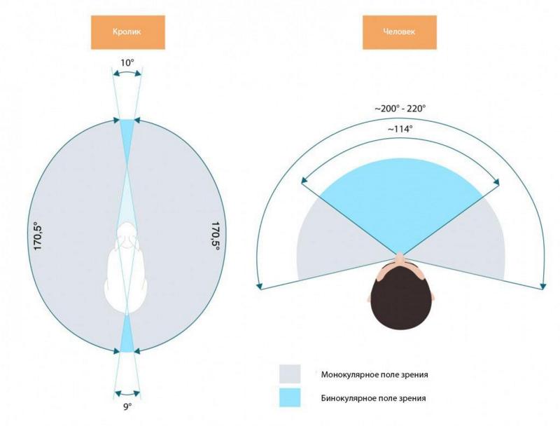 Поле зрения человека в градусах схема картинка леди