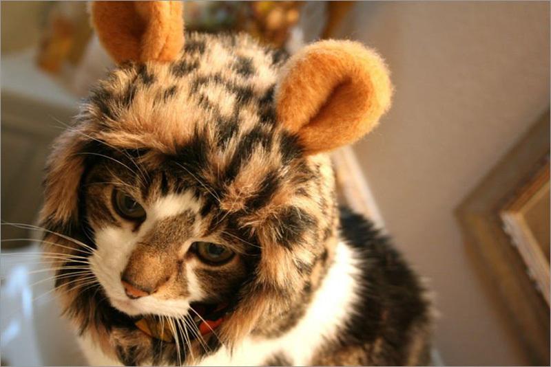 Котята в шапочках фото
