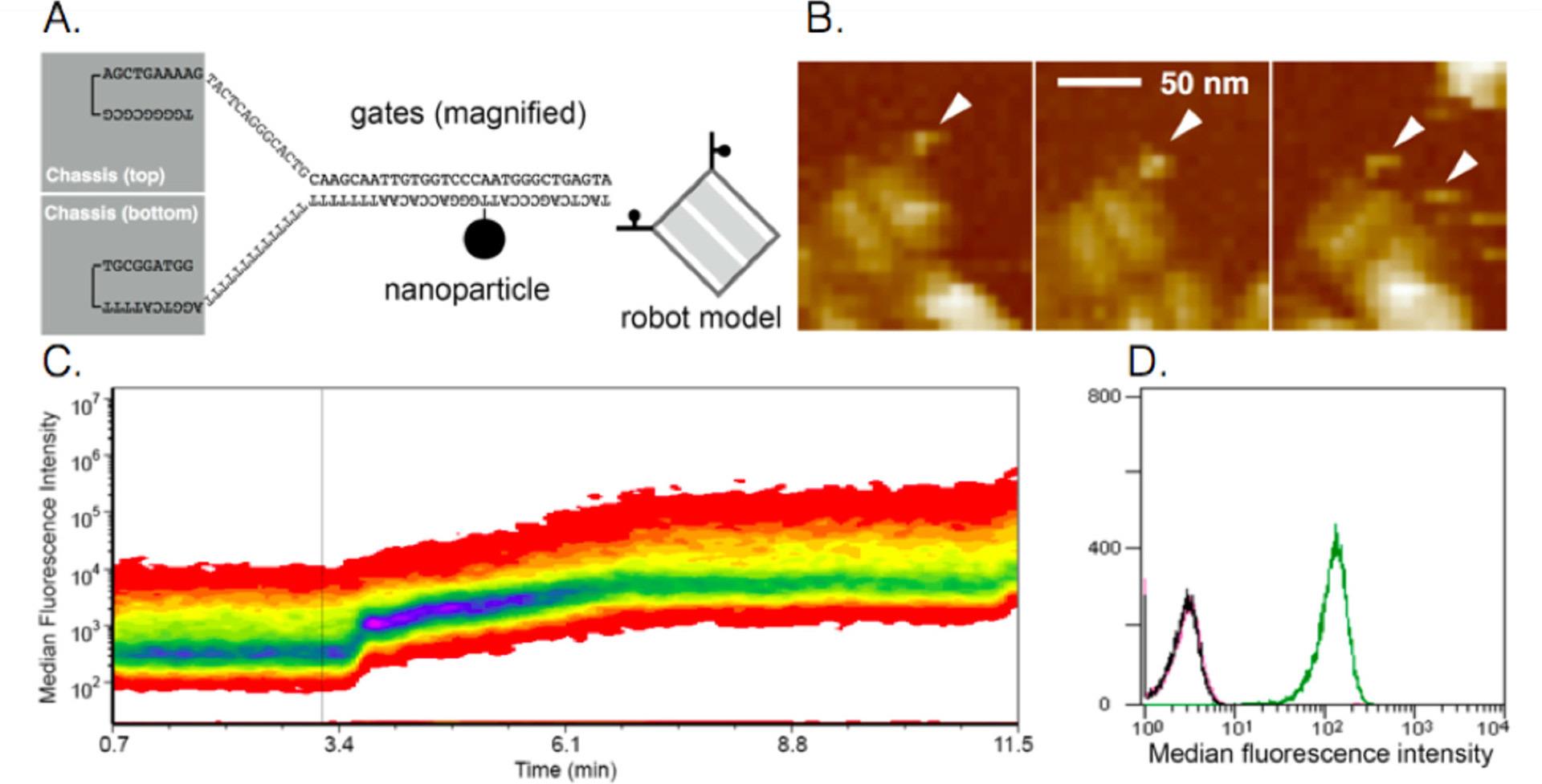 «Умные» наноботы впрыскивают вещества, реагируя на состояние мозга