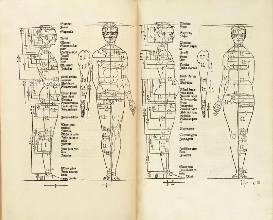Схема пропорций человека