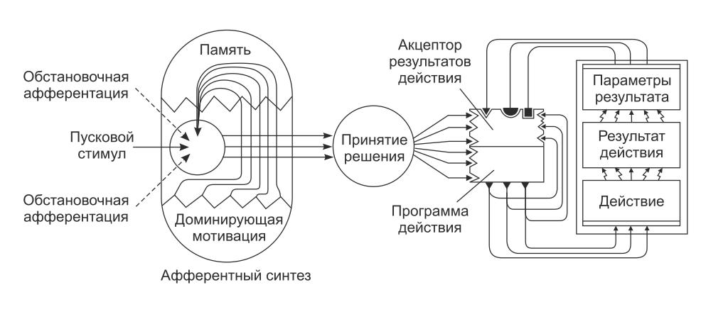 Элементарные физиологические