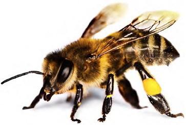 Справочник «пчеловода» или отвечаем на вопросы по микроконтроллерам EFM8 Bee