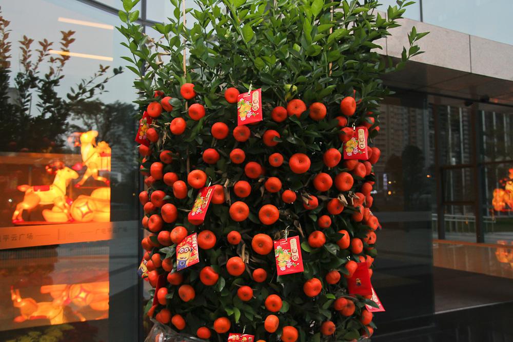 Мандариновое дерево на новый год