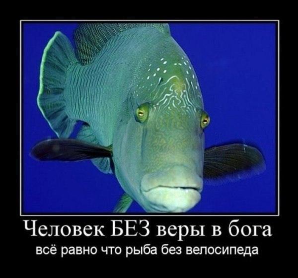 Рыба без велосипеда