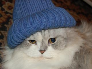 Кот Вася в синей шапке. Powered by Граммар наци.