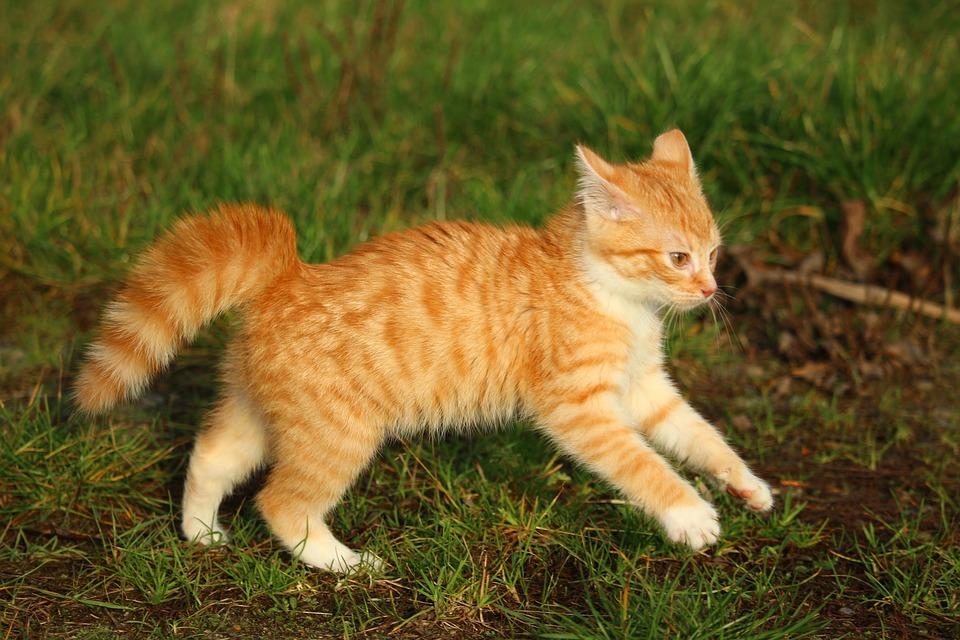 Новое исследование показало, что кошек приручили не так, как других животных