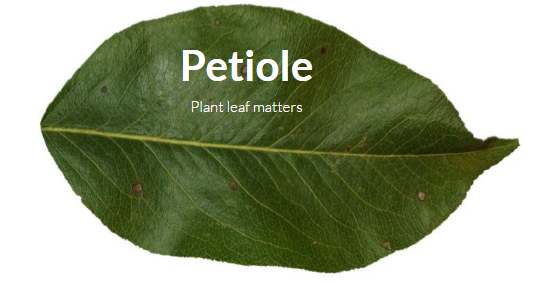Petiole Leaf Area. Interview with Andrii Seleznov