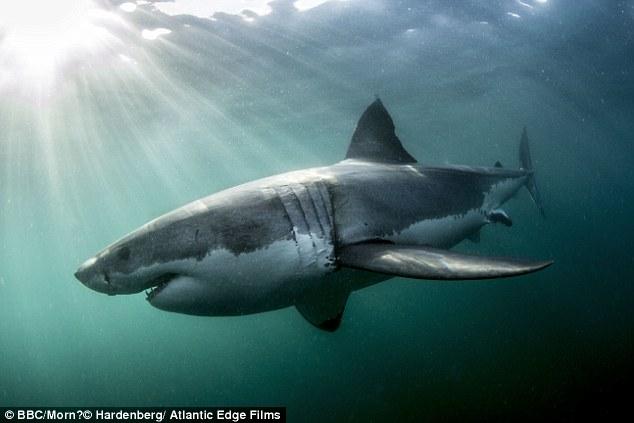 Акулы и дельфины как оружие в руках военных