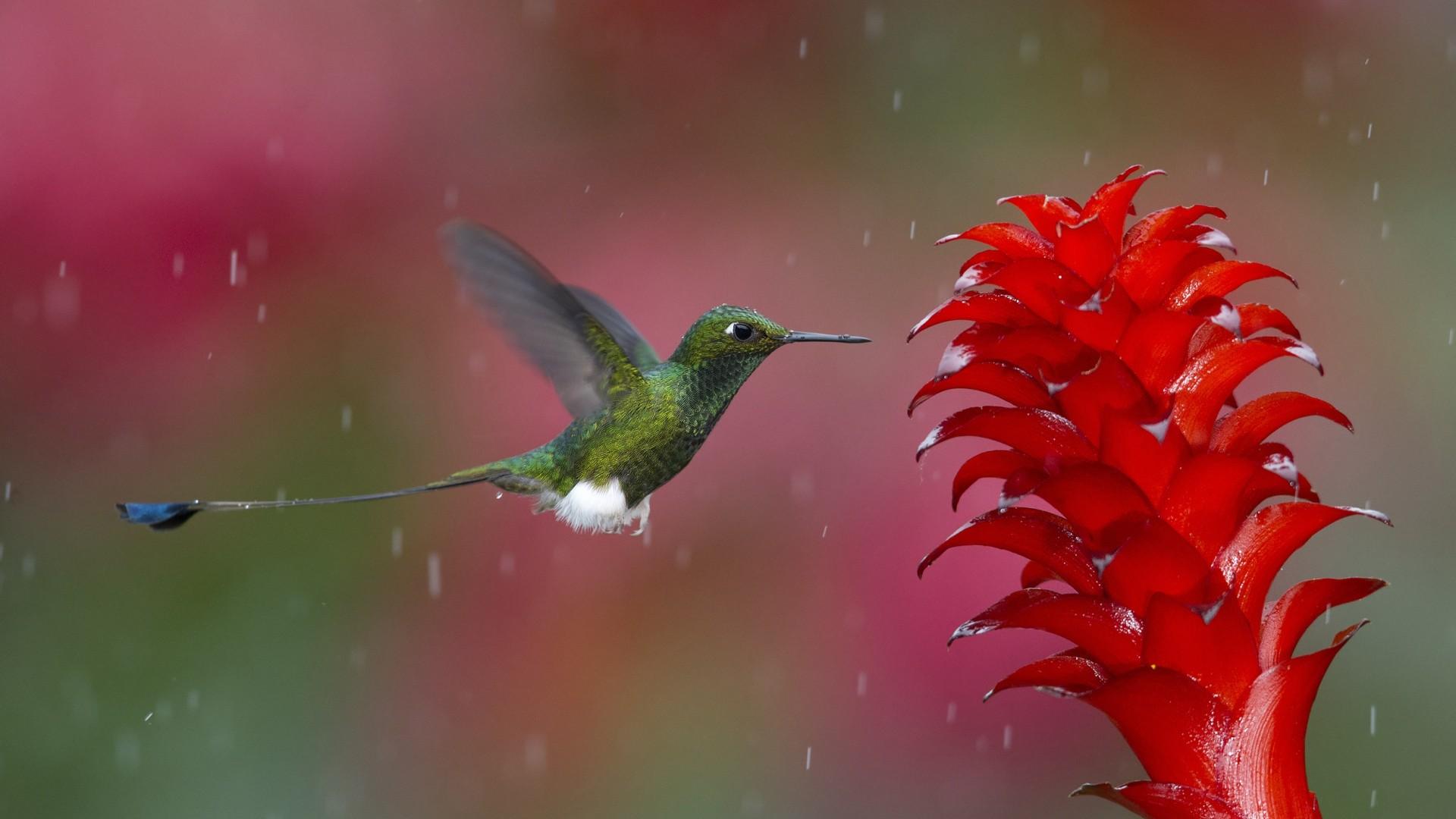 Физика в мире животных: колибри и ее полет