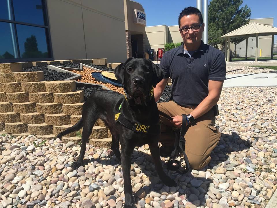 Полицейские США используют собак для поиска спрятанных цифровых носителей информации