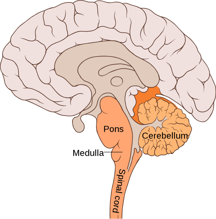 Мозг. Вводный курс: познакомьтесь с вашим хозяином и повелителем