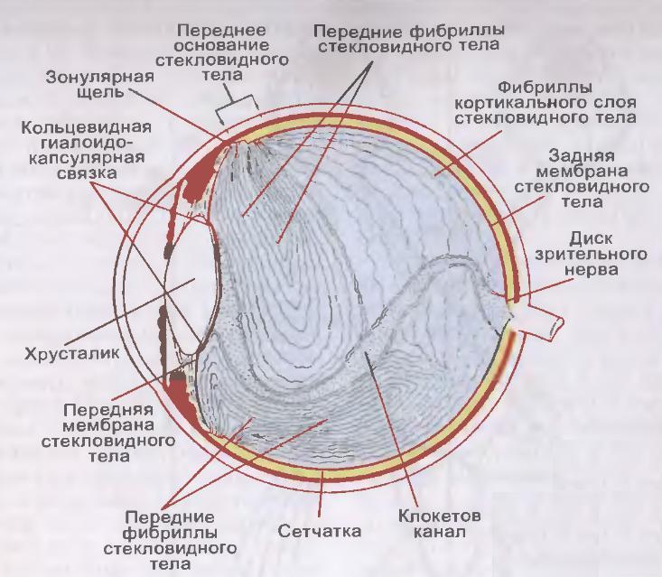 Летающие мошки» и «стеклистые червяки» в глазах, или откуда ...