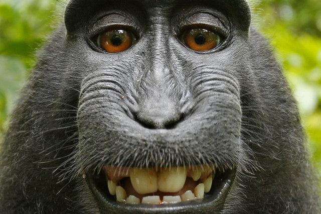 Игра на андроид про обезьян Bloons Monkey