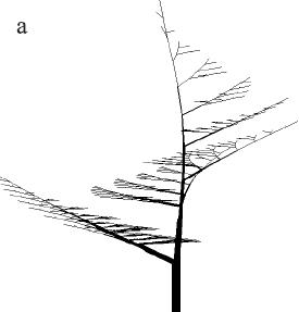 Рисунок 2.7a. Модели деревьев с симподиальным ветвлением Эоно и Кьюниай, полученные на L-systems.