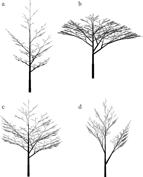 Рисунок 2.6. Примеры моноподиальных древоподобных структур Хонды, полученные на L-systems.