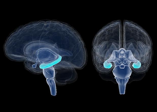 Стартап KerNEL пытается создать коммерческие мозговые импланты для улучшения памяти