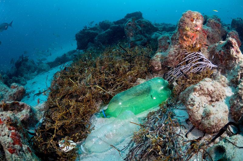 Результаты 4-летнего исследования коралловых рифов: пластик убивает кораллы