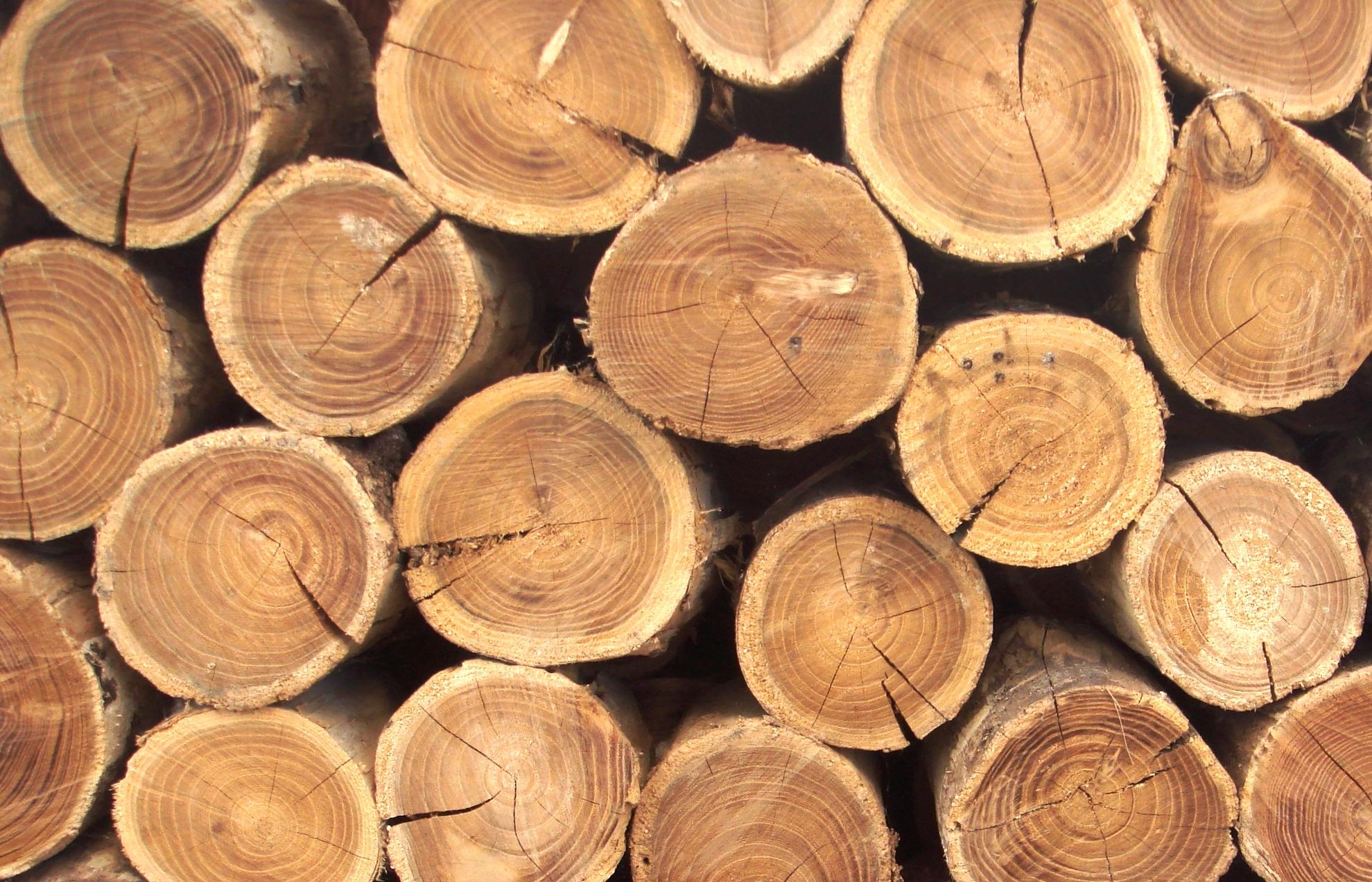 Обычную древесину сделали более прочной, чем сталь или титан