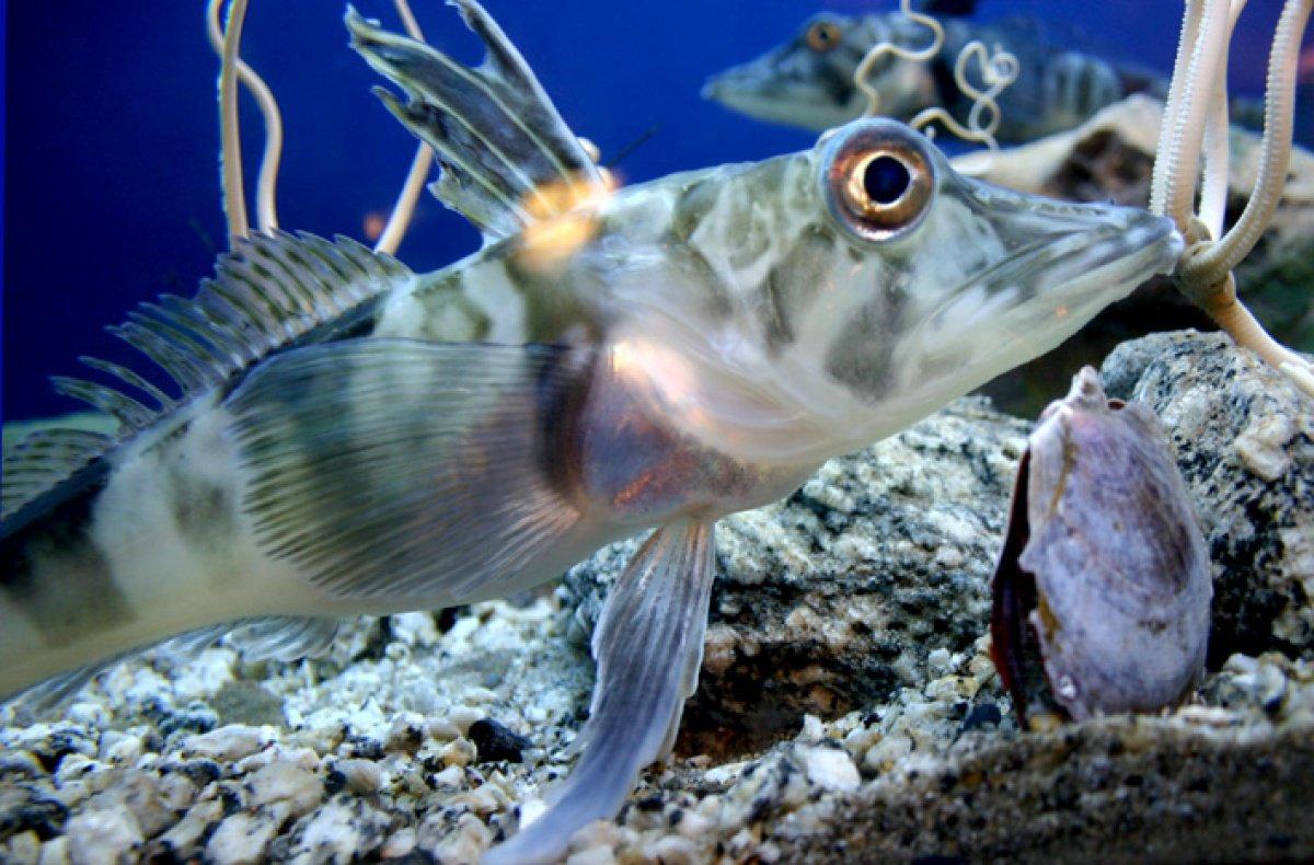 Кровь и лед: как антарктические рыбы утеряли гемоглобин, но смогли выжить