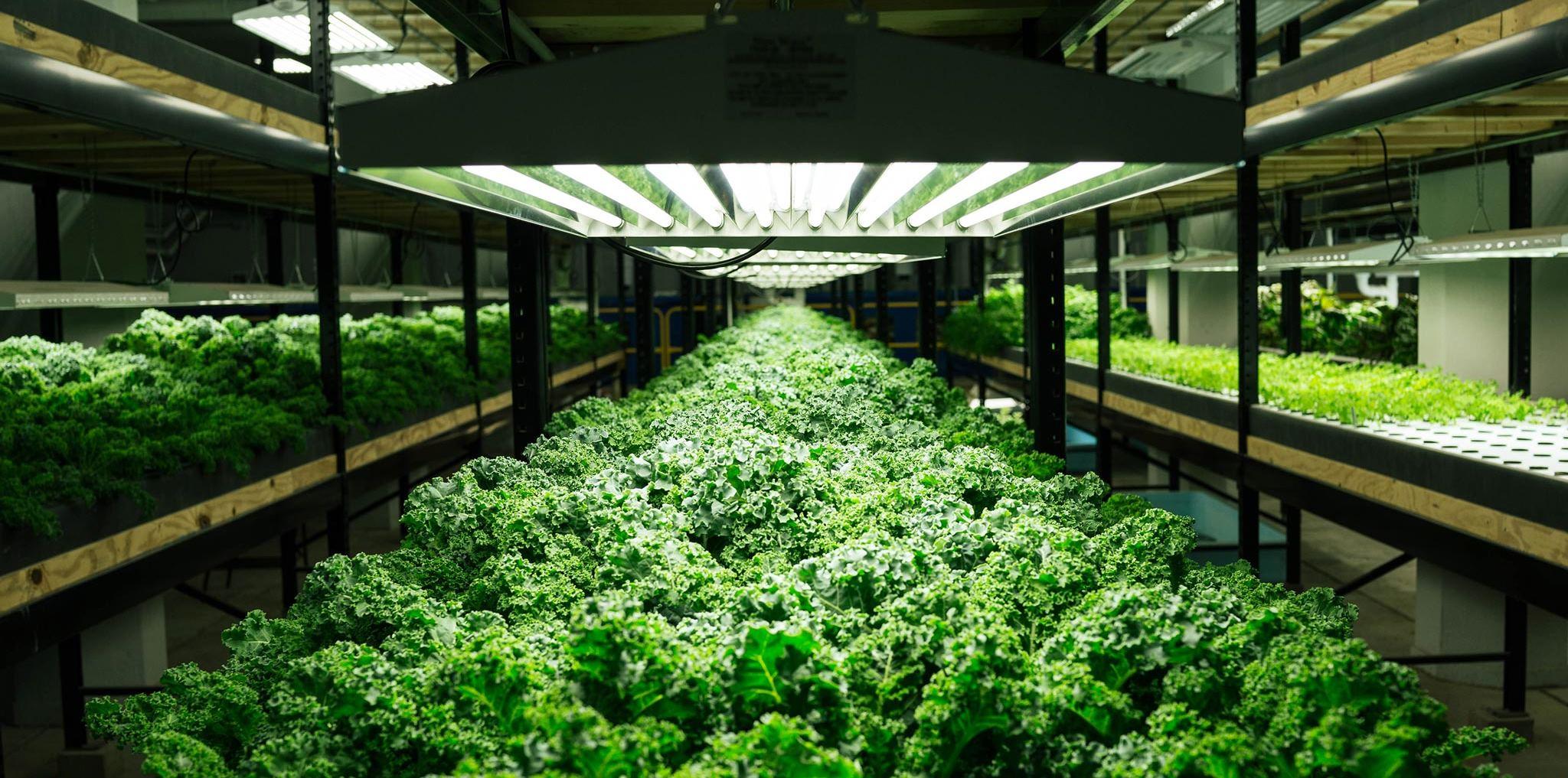 Городское фермерство — будущее сельского хозяйства