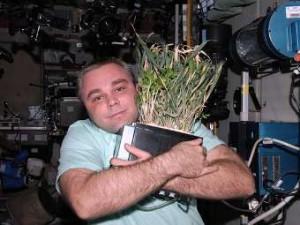 Максим Сураев Растениеводство на МКС