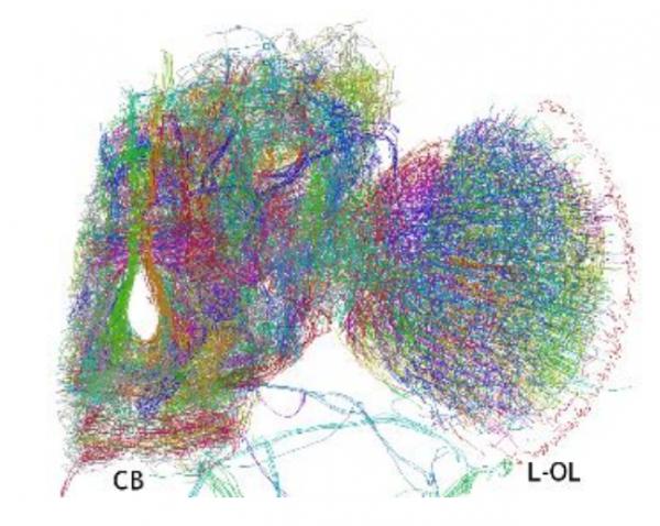 Модели работы мозга работа для девушек тараз