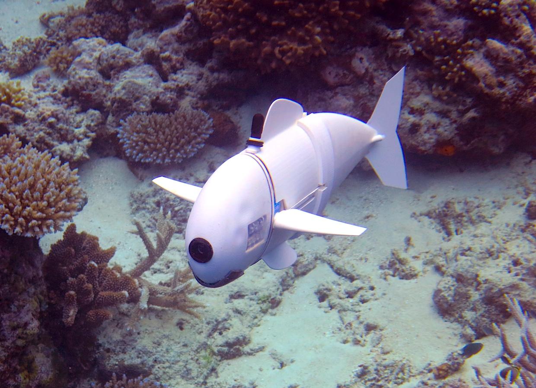 Роборыба, созданная учеными MIT, изучает коралловые рифы на Фиджи