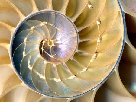 Физика в мире животных: наутилус и его «осмотический насос»