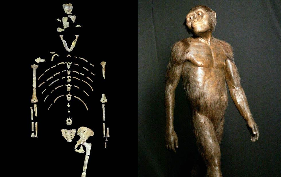 Продам люси древний предок кто это указатель