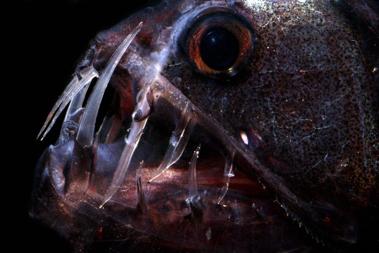 Подводные вулканы — оазис в глубоководном мире