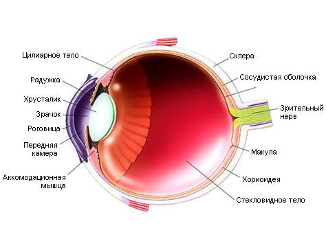 человеческого глаза (еще